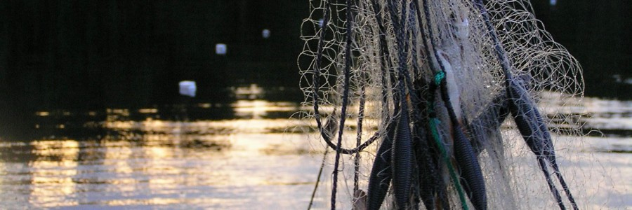 Vesi-, kala- ja ympäristötutkimukset - KVVY