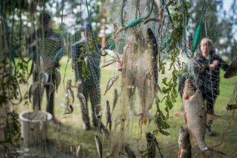 Erikokoisia kaloja ylösripustetussa kalaverkossa, taustalla ihmisiä.