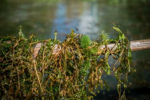 Erilaisia vesikasveja airon päällä.