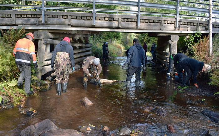 Ihmisiä purossa rakentamassa sorasta kaloille kutupaikkoja