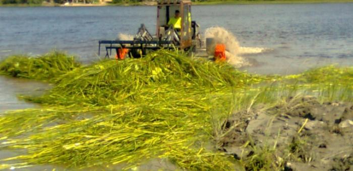 Niittokone kerää niitettyä vesikasvillisuutta järvestä