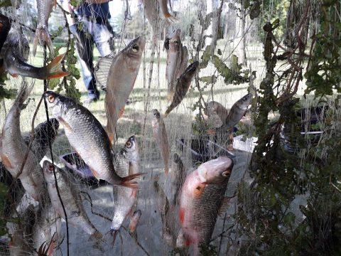 Kalaverkko, jossa kaloja ja kasvillisuutta