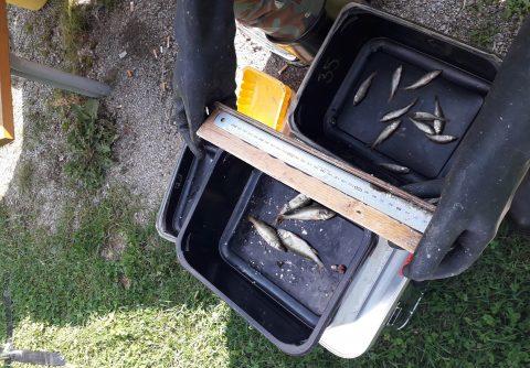 Kaloja lajiteltuna laatikoissa