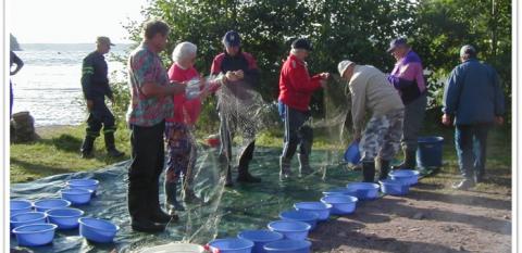 Ihmisiä rannalla irrottamassa kaloja verkoista