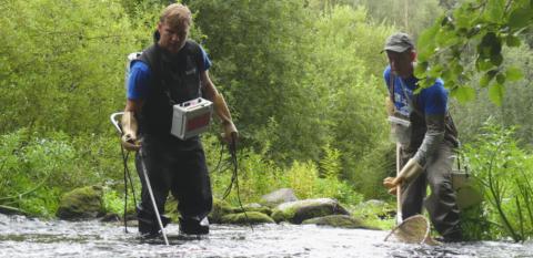Kaksi miestä kahlaa joessa, toisella sähkökoekalastuslaitteisto ja toisella haavi.